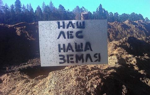 """Цаговский лес. Июнь 2012. Фото: """"Фронде ТВ"""""""