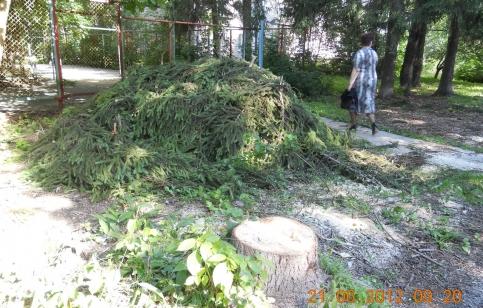 Вырубка Селятинского леса. 2012 год.