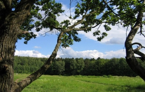 Битцевский лес.